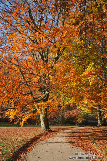 Trees in autumn colour