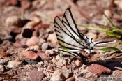 Travel photography:Butterfly near Len��is, Brazil