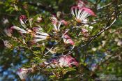 Travel photography:Flowering tree near Len��is, Brazil