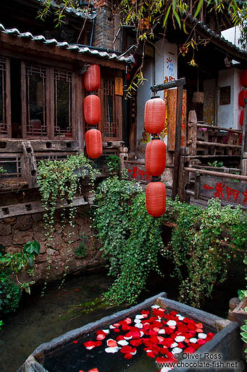 Rose petals in a water trough in Lijiang�s old town