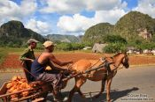 Travel photography:Horse carriage near Vi�ales, Cuba