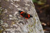 Travel photography:Butterfly in Tenerife Anaga Rural Park, Spain