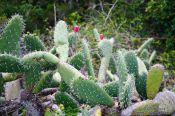 Travel photography:Cactus in Anaga Rural Park, Spain