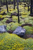 Travel photography:Forest near Teide National Park, Spain