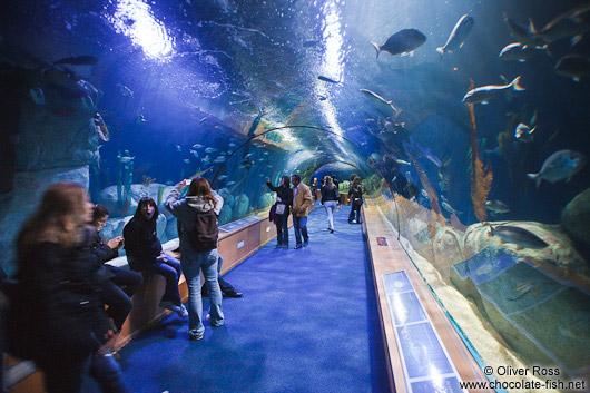 Spanien Valencia/Tunnel in the Valencia Aquarium - Chocolate Fish ...