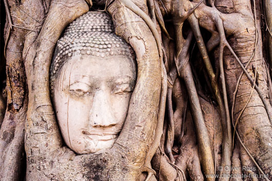 Overgrown Buddha in Ayutthaya
