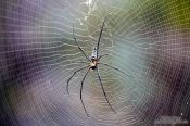 Travel photography:Large spider sitting in its web in Chiang Mai province, Thailand