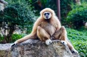 Travel photography:Monkey in Chiang Mai Zoo, Thailand