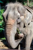 Travel photography:Elephant at the Mae Rim Elephant Center, Thailand