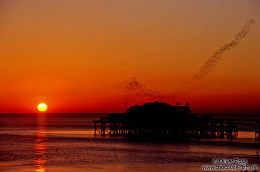 Starlings playing over Brighton Pier at sunset