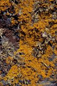 Travel photography:Lichen growing on rock, United Kingdom