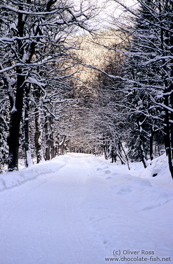 Path in wintery landscape