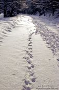 Travel photography:Tracks in the snow, Germany