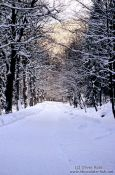 Path in wintery landscape, Germany