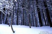 Frozen forest, Germany