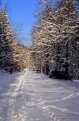 Travel photography:Path through wintery landscape, Germany