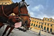 Travel photography:Schönbrunn palace with horse showing tongue , Austria