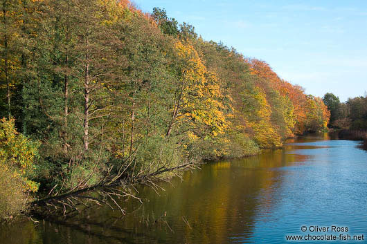 Trees along the Schwentine river near Kiel