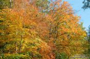 Travel photography:Trees in the Schwentinetal valley near Kiel, Germany