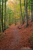 Travel photography:Forest in the Schwentinetal valley near Kiel, Germany