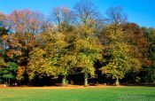 Travel photography:Trees in autumn colour