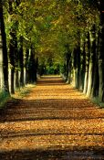 Travel photography:Park lane in autumn