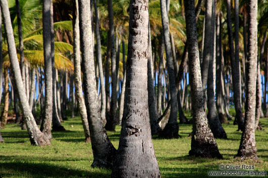 Palms on Boipeba Island