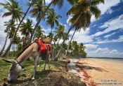 Travel photography:Donkey on a Boipeba Island beach, Brazil