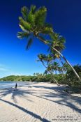 Travel photography:Boipeba Island beach palm trees, Brazil
