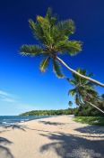 Travel photography:Beach with palms on Boipeba Island, Brazil