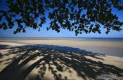 Travel photography:Tree providing shade on a Boipeba Island beach, Brazil