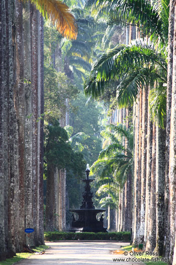Avenue of Royal palms (Roystonea) within Rio´s Botanical Garden