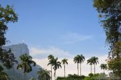 Travel photography:View of the Corcovado from within the Botanical Garden, Brazil