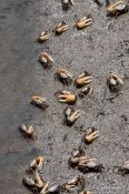 Travel photography:Crabs on a beach near Cabo Frio, Brazil