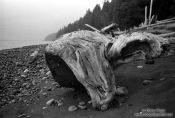 Travel photography:Tree trunk washed up on a beach on Vancouver Island, Canada