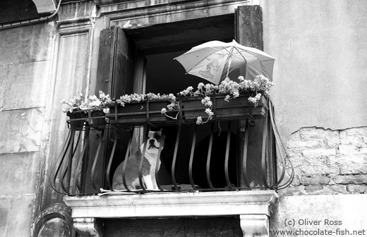 Balcony with dog in Venice