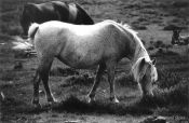 Travel photography:New Forest Pony, United Kingdom