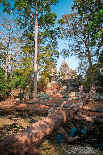 Moat and trees surrounding Banteay Kdei