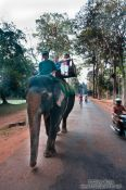 Travel photography:Elephants walk through Angkor Thom, Cambodia