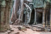 Travel photography:Ta Prom temple with giant tree roots, Cambodia