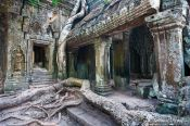 Travel photography:Giant tree roots have reclaimed most of Ta Prom , Cambodia
