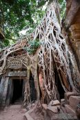 Travel photography:A mesh of tree roots cover this door at Ta Prom , Cambodia