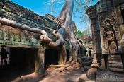 Travel photography:The trees are reclaiming Ta Prom , Cambodia