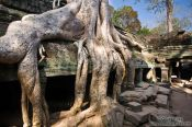 Travel photography:Giant tree roots at Ta Prom , Cambodia