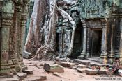 Travel photography:Giant tree roots cover these doors at Ta Prom temple, Cambodia