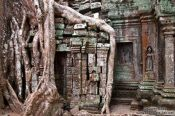 Travel photography:Tree roots cover this door at Ta Prom , Cambodia
