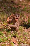 Travel photography:Monkeys near Angkor Thom, Cambodia