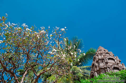 Blossoming tree at Wat Ohnalom