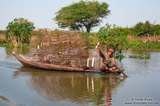 Transporting crab traps to Tonle Sap lake