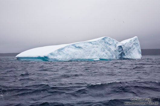 Iceberg near Bay Bulls